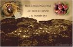 sandonatodininea-27bis-10-2012.jpg